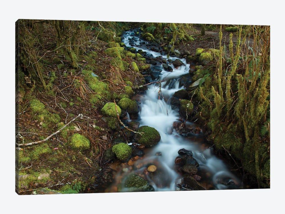 Stream In The Rainforest Near Alice Lake Provincial Park. Squamish, British Columbia, Canada. by Kristin Piljay 1-piece Canvas Art Print