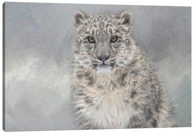 Snowy Gaze Canvas Art Print