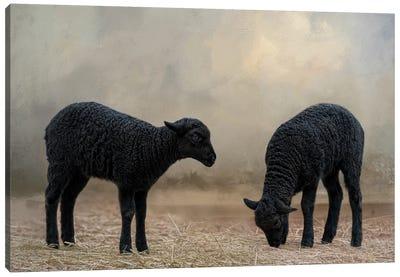 Baa, Baa, Black Sheep Canvas Art Print