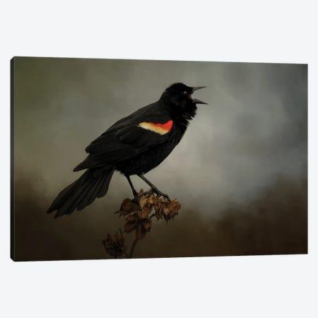Blackbird Has Spoken Canvas Print #KPK15} by Kelley Parker Canvas Art