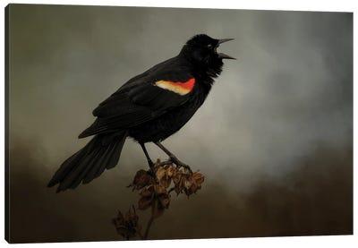 Blackbird Has Spoken Canvas Art Print