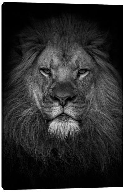 Face Of A King Canvas Art Print