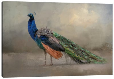 Feathered Dreams Canvas Art Print