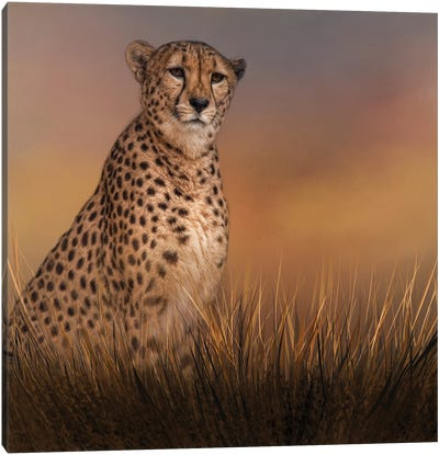 In The Brush Canvas Art Print