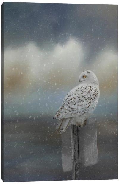 Arctic Hunter Canvas Art Print