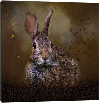 Autumn Bunny Canvas Art Print
