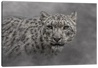 Out Of The Mist Canvas Art Print