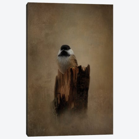 Resting Place Canvas Print #KPK99} by Kelley Parker Canvas Art Print