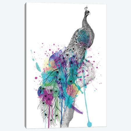 Peacock Canvas Print #KRB8} by Karin Roberts Canvas Artwork