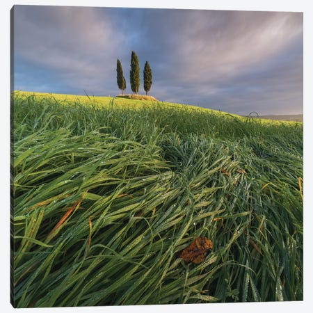 Spring In Tuscany VI Canvas Print #KRD102} by Daniel Kordan Canvas Art