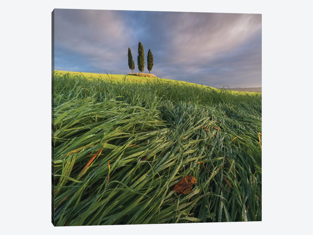 Spring In Tuscany VI 1-piece Canvas Art