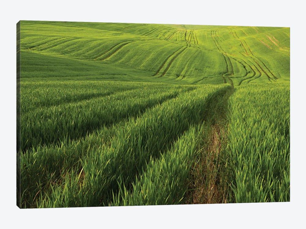 Spring In Tuscany XV by Daniel Kordan 1-piece Canvas Wall Art