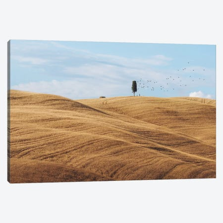 Summer In Tuscany Canvas Print #KRD116} by Daniel Kordan Canvas Artwork