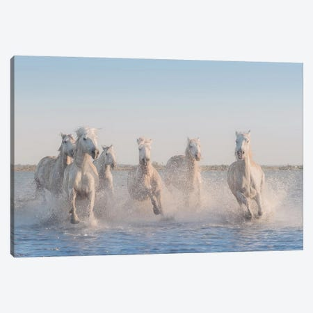 White Angels Of Camargue II Canvas Print #KRD119} by Daniel Kordan Canvas Art Print
