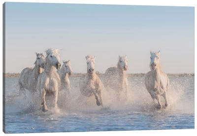 White Angels Of Camargue II Canvas Art Print
