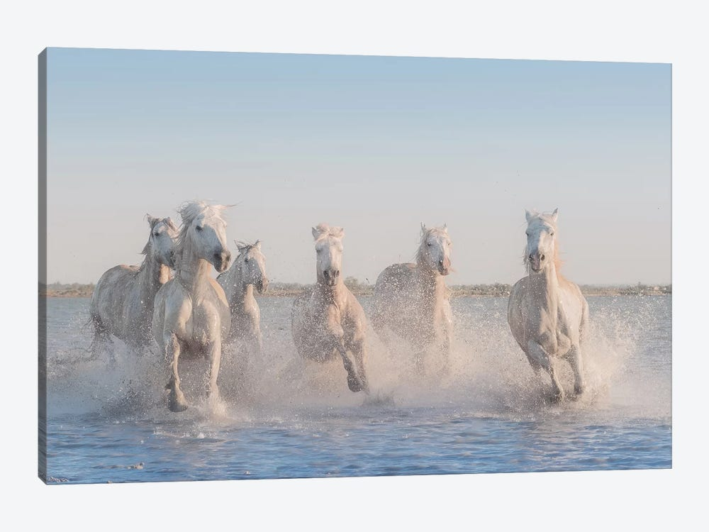 White Angels Of Camargue II 1-piece Canvas Wall Art