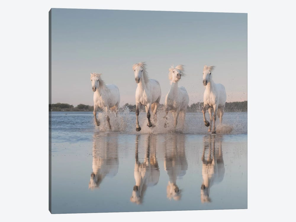 White Angels Of Camargue III by Daniel Kordan 1-piece Canvas Wall Art