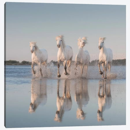 White Angels Of Camargue III Canvas Print #KRD120} by Daniel Kordan Canvas Artwork