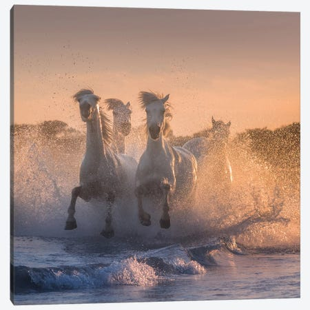 White Angels Of Camargue V Canvas Print #KRD122} by Daniel Kordan Canvas Artwork