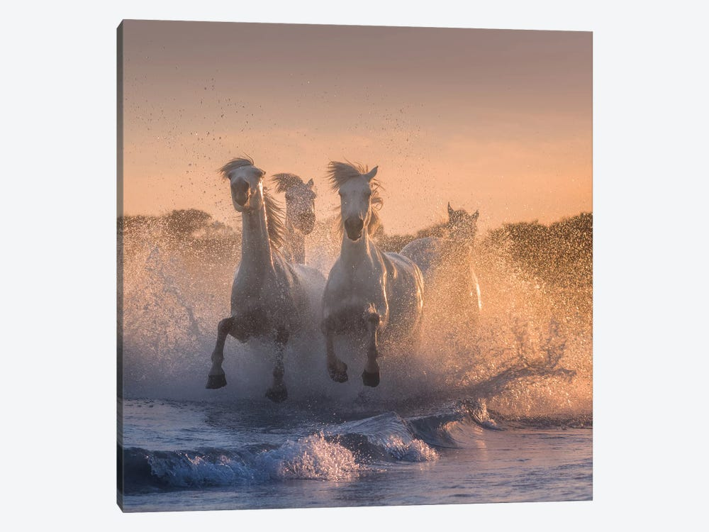 White Angels Of Camargue V by Daniel Kordan 1-piece Canvas Artwork