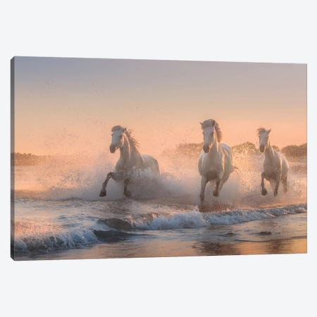 White Angels Of Camargue VI Canvas Print #KRD123} by Daniel Kordan Canvas Art