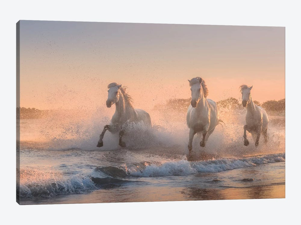 White Angels Of Camargue VI by Daniel Kordan 1-piece Canvas Print