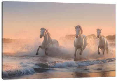 White Angels Of Camargue VI Canvas Art Print
