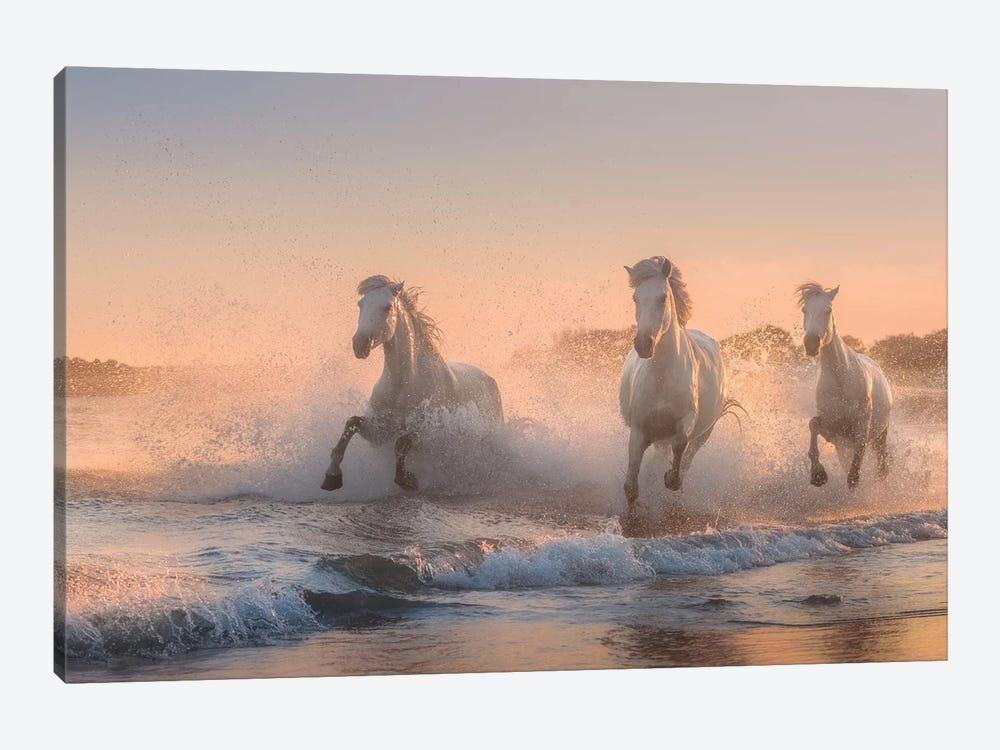 White Angels Of Camargue VI by Daniel Kordan 1-piece Canvas Print