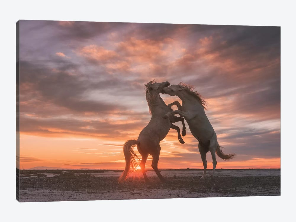 White Angels Of Camargue VII by Daniel Kordan 1-piece Canvas Artwork
