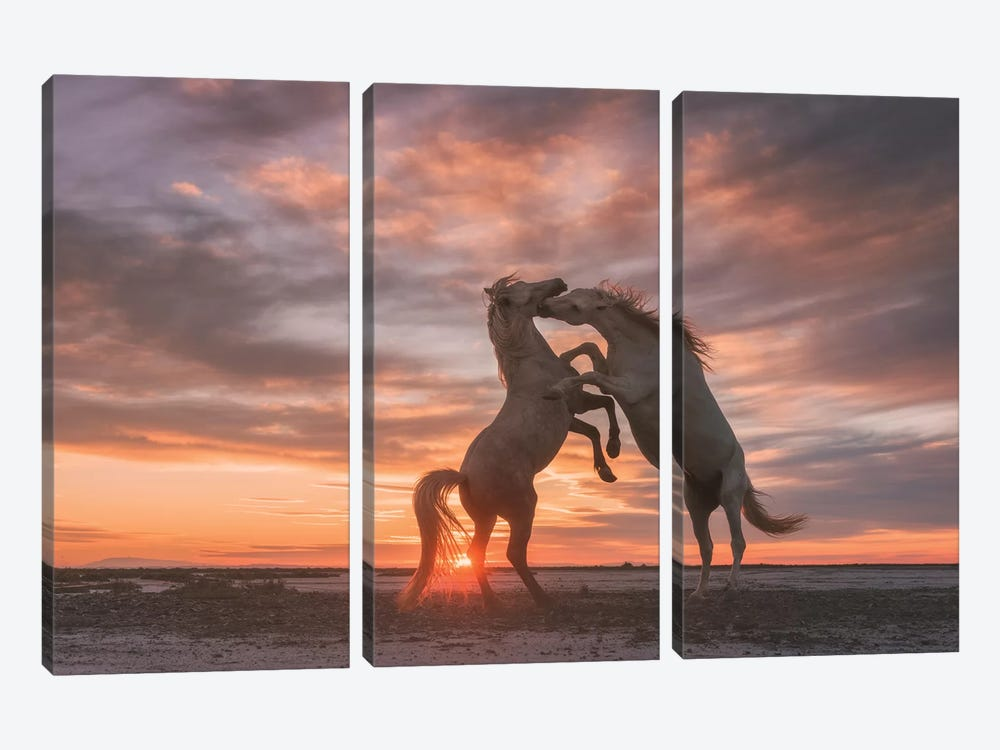 White Angels Of Camargue VII by Daniel Kordan 3-piece Canvas Art