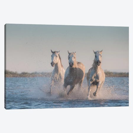 White Angels Of Camargue VIII Canvas Print #KRD125} by Daniel Kordan Art Print