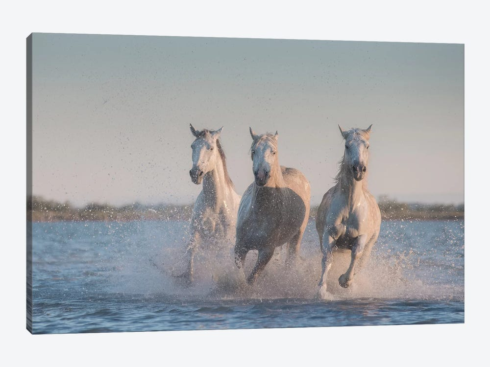 White Angels Of Camargue VIII by Daniel Kordan 1-piece Canvas Print