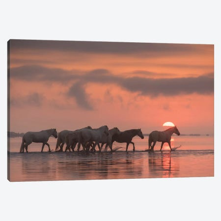 White Angels Of Camargue XI Canvas Print #KRD128} by Daniel Kordan Canvas Artwork