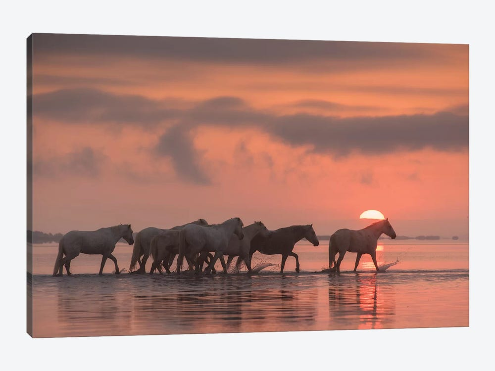 White Angels Of Camargue XI by Daniel Kordan 1-piece Canvas Art