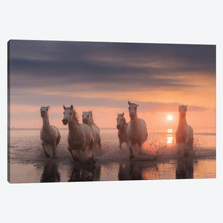 White Angels Of Camargue XII Canvas Print #KRD129} by Daniel Kordan Canvas Art