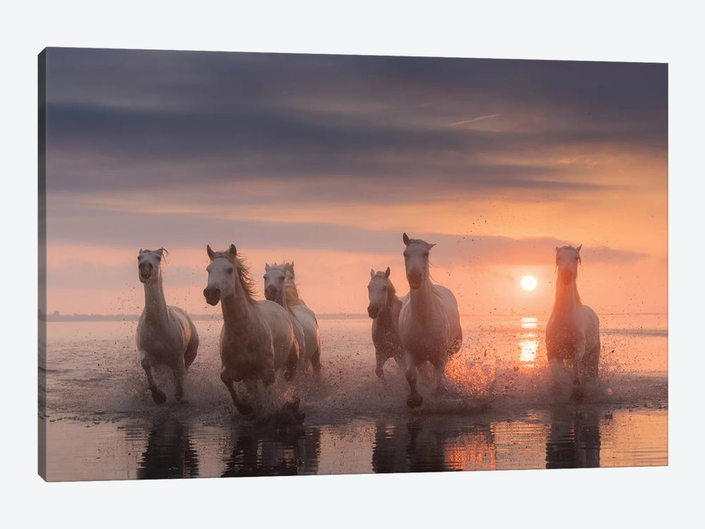 White Angels Of Camargue XII by Daniel Kordan 1-piece Canvas Art Print