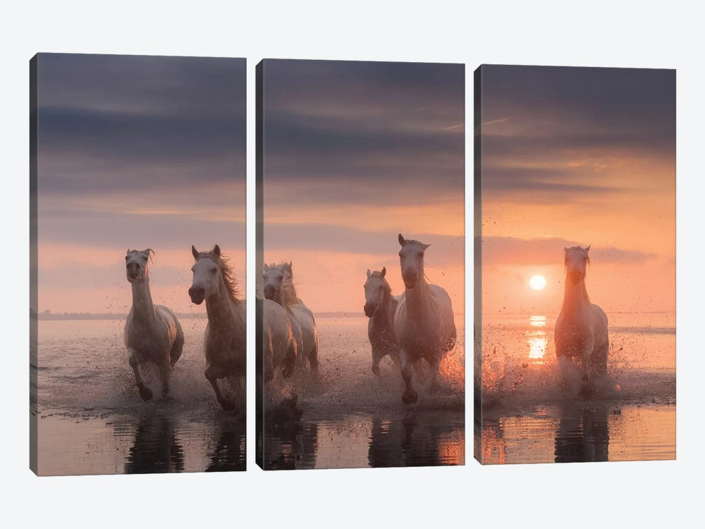 White Angels Of Camargue XII by Daniel Kordan 3-piece Art Print