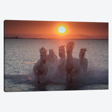 White Angels Of Camargue XIII Canvas Print #KRD130} by Daniel Kordan Canvas Art Print