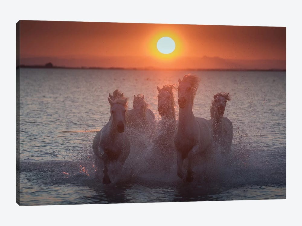 White Angels Of Camargue XIII by Daniel Kordan 1-piece Canvas Print