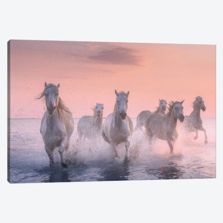 White Angels Of Camargue XV Canvas Print #KRD132} by Daniel Kordan Canvas Print