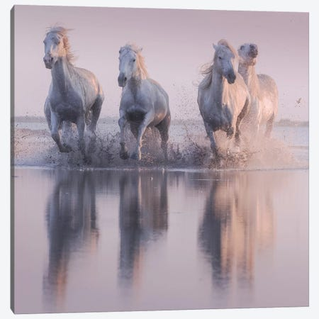 White Angels Of Camargue XVI Canvas Print #KRD133} by Daniel Kordan Canvas Art Print