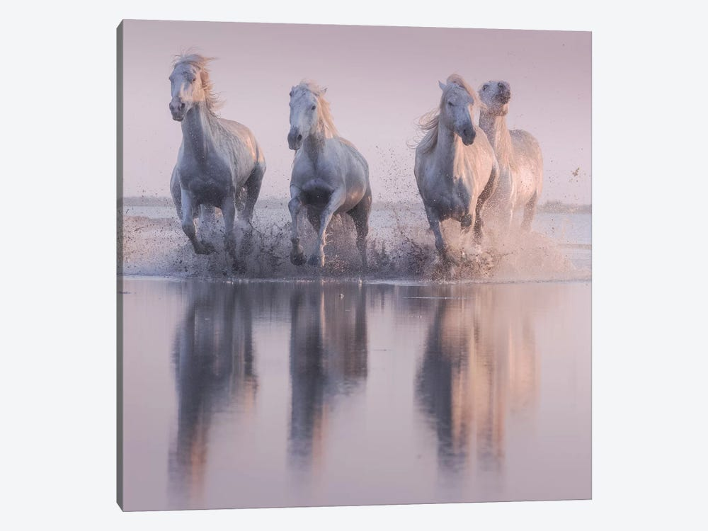 White Angels Of Camargue XVI by Daniel Kordan 1-piece Canvas Artwork