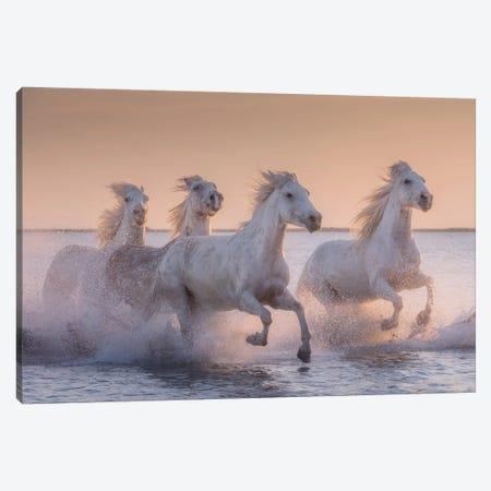 White Angels Of Camargue XVII Canvas Print #KRD134} by Daniel Kordan Canvas Artwork