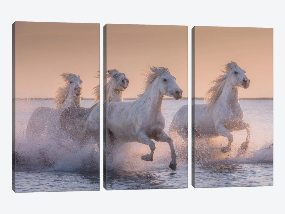 White Angels Of Camargue XVII by Daniel Kordan 3-piece Art Print