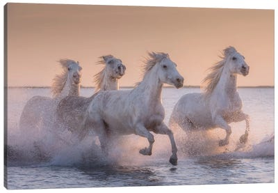 White Angels Of Camargue XVII Canvas Art Print