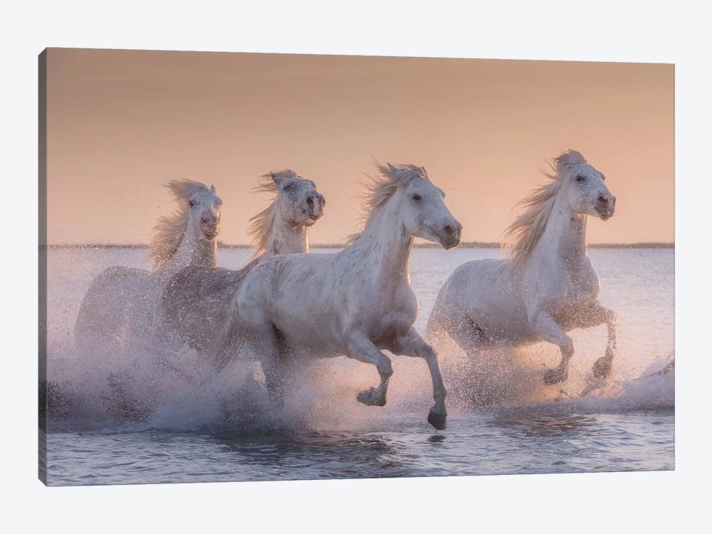 White Angels Of Camargue XVII by Daniel Kordan 1-piece Art Print