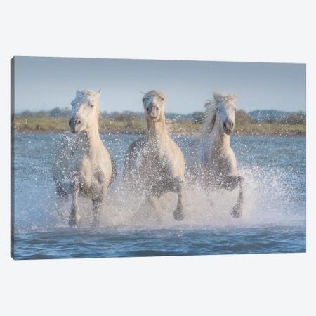 White Angels Of Camargue XVIII Canvas Print #KRD135} by Daniel Kordan Canvas Artwork