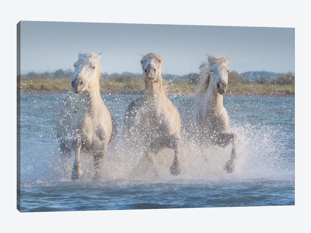 White Angels Of Camargue XVIII by Daniel Kordan 1-piece Canvas Wall Art