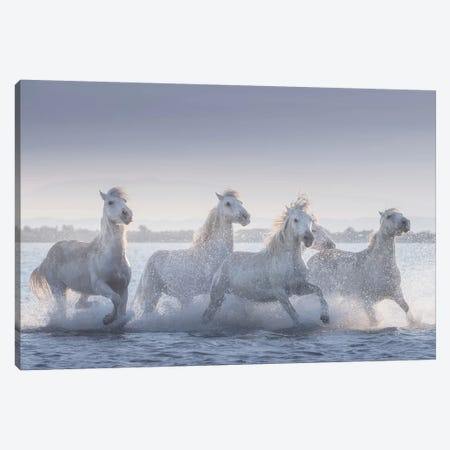 White Angels Of Camargue XIX Canvas Print #KRD136} by Daniel Kordan Canvas Artwork