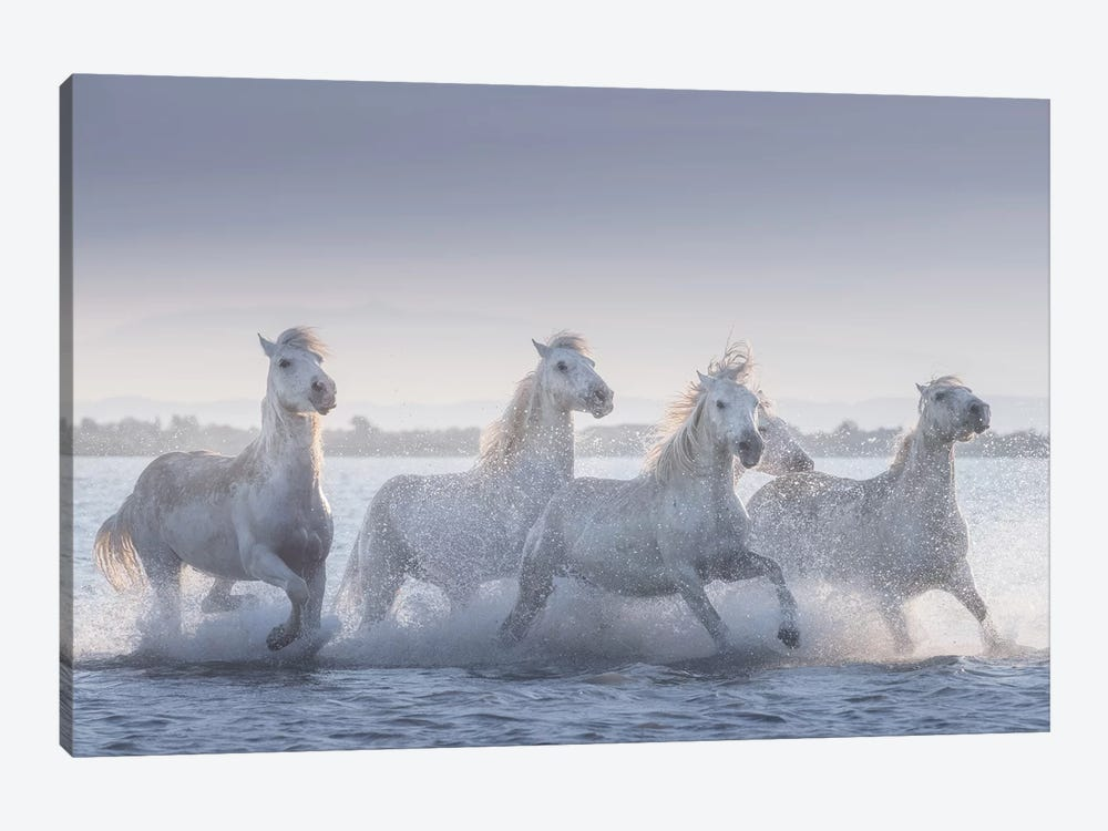 White Angels Of Camargue XIX by Daniel Kordan 1-piece Art Print